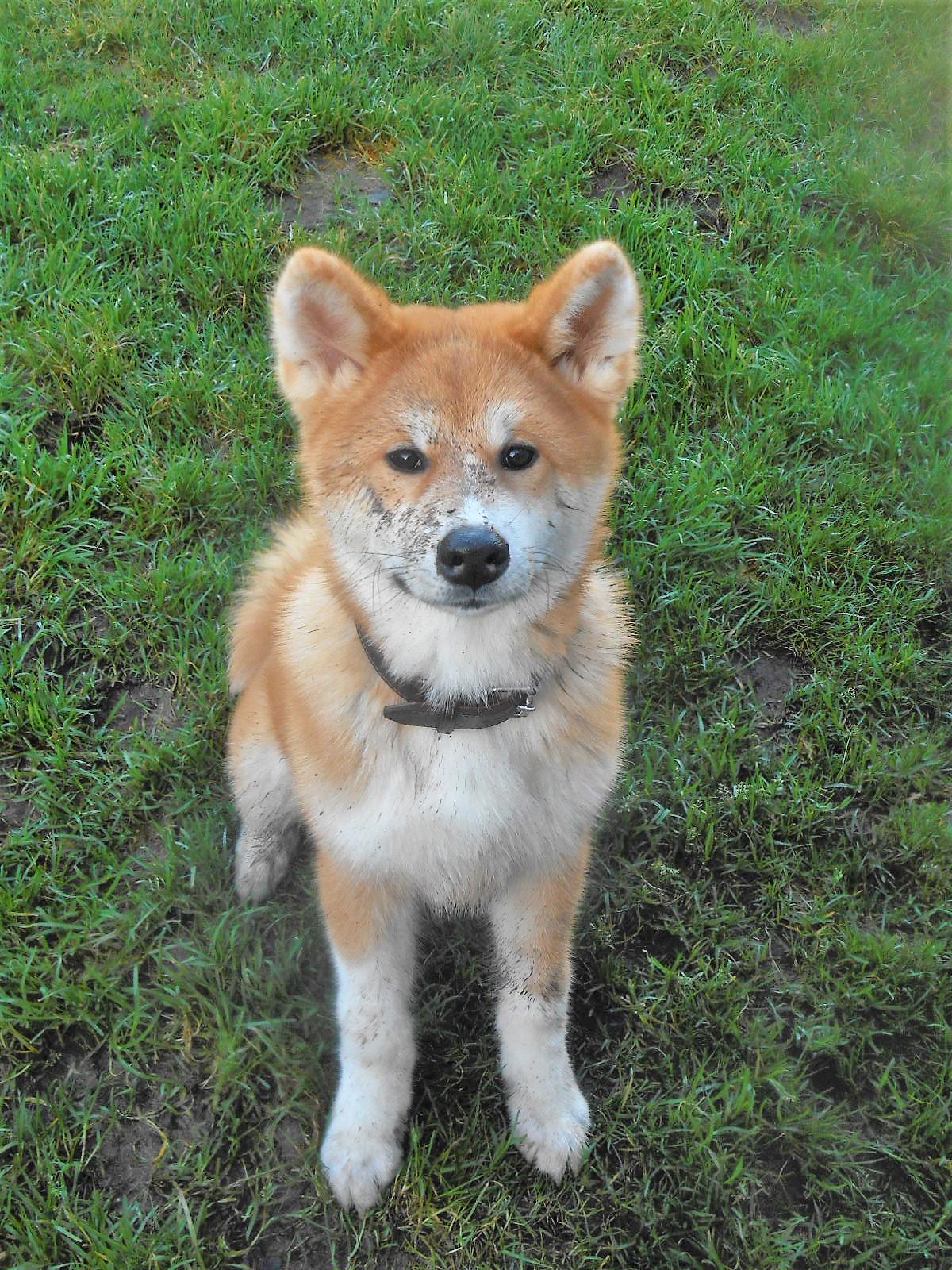 Hondenwassalon
